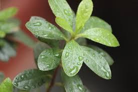 regen en plant