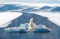 klimaatverandering ijsbeer