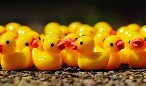 sitting ducks speelgoed