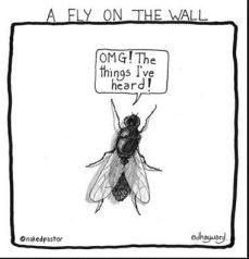 Vlieg op de muur
